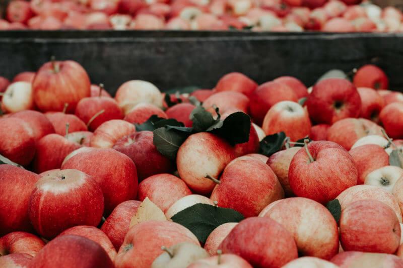 La plataforma climática Ikaros integra la información agroclimática como herramienta de eficiencia en la producción de manzanas para su exportación.