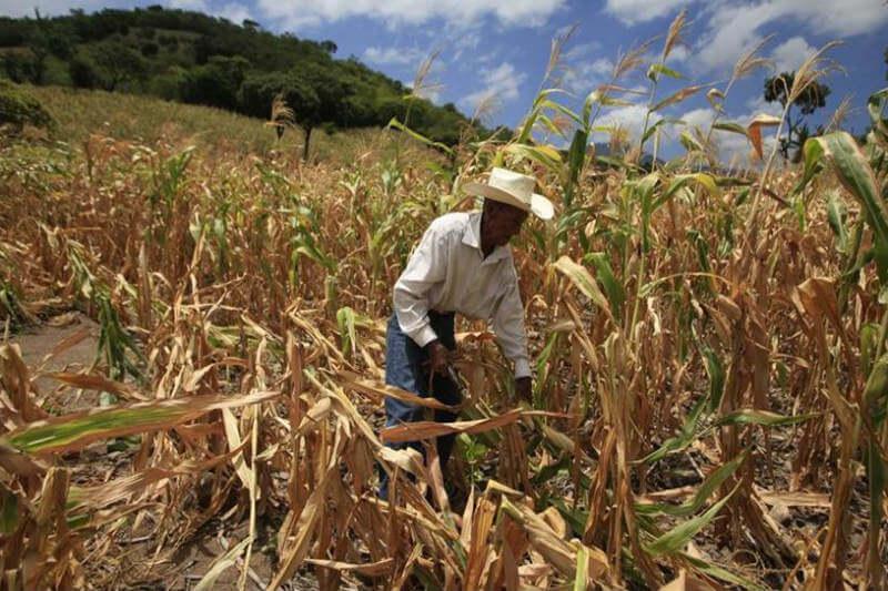 El invierno va de mayo a julio y de septiembre a octubre. Pero la temporada se interrumpió, afectando las cosechas e incrementando los precios en alimentos.