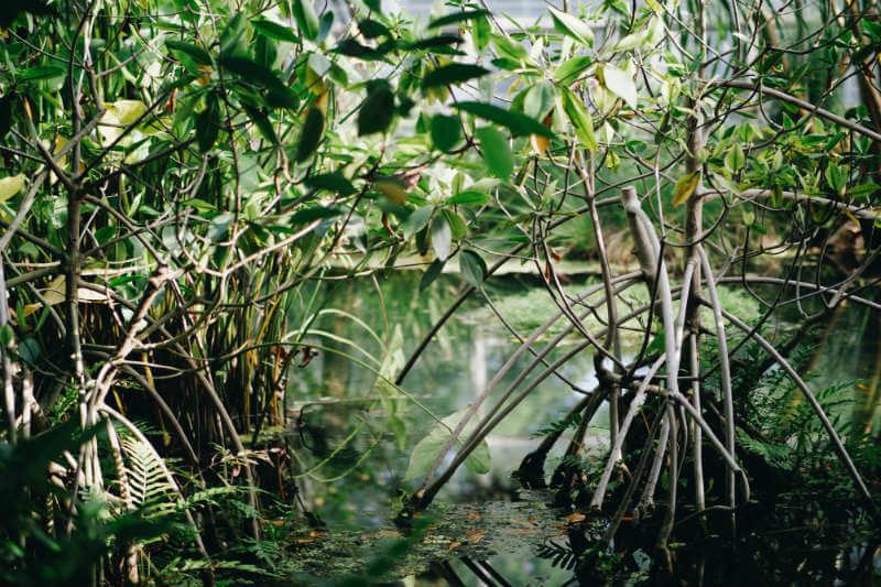 La empresa está invirtiendo en un proyecto en Colombia para restaurar manglares y secuestrar hasta 17,000 toneladas métricas de CO2 en dos años.