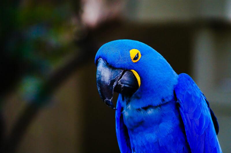"""Junto con el guacamayo azul que inspiró la película """"Río"""" en 2011, hay otras ocho especies de aves que han dejado de existir, según BirdLife International."""
