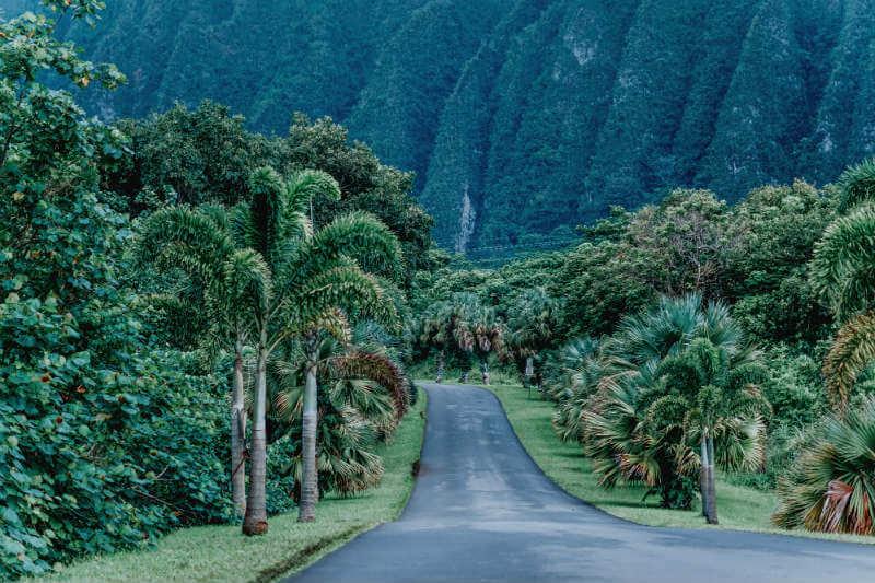 """""""El compromiso duplica aproximadamente los fondos que los grupos dedican actualmente a la protección forestal"""", David Kaimowitz, director de la Fundación Ford."""