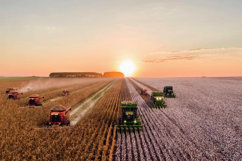 El aumento de plagas en vegetales provocará pérdidas mundiales de cosechas de arroz, maíz y trigo entre un 10% y un 25% por cada grado centígrado en aumento.