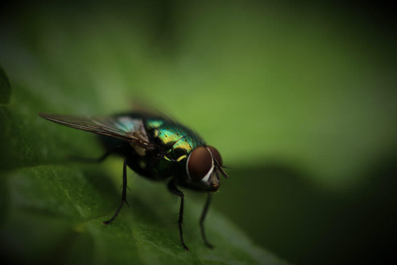 Estudio muestra que los microplásticos se propagan a través de insectos voladores, contaminando nuevos ambientes y poniendo en peligro a las aves que los comen.
