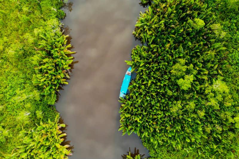 Este carbono ha cobrado relevancia ya que es una de las razones para proteger ecosistemas costeros dada su capacidad para absorber grandes cantidades de CO2.
