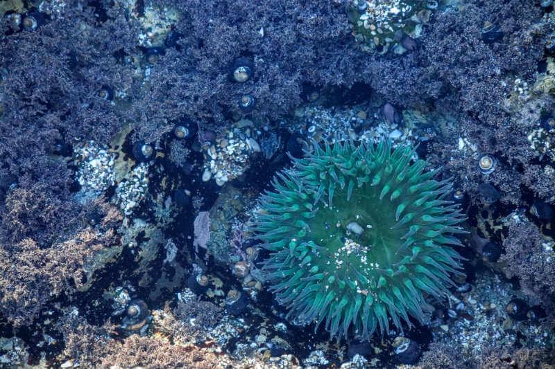 La CONANP y Costa Salvaje han puesto en marcha medidas de protección que mitiguen las amenazas que sufren los corales.