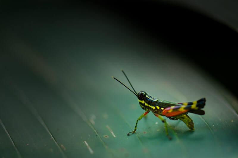Según varios estudios muestran disminuciones dramáticas en las poblaciones de invertebrados, los insectos de todo el mundo se encuentran en una crisis.