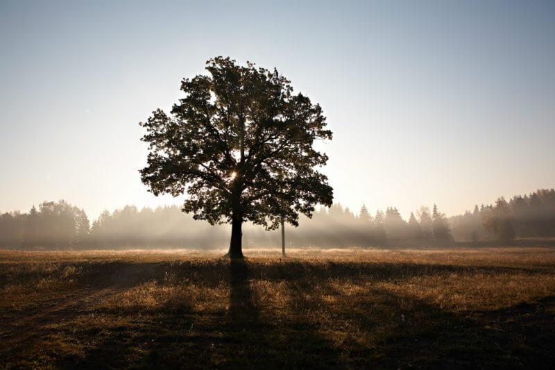 Proteger y restaurar los bosques reduciría el 18% de las emisiones para 2030 y ayudaría a evitar el aumento de la temperatura global más allá de 1.5°C.