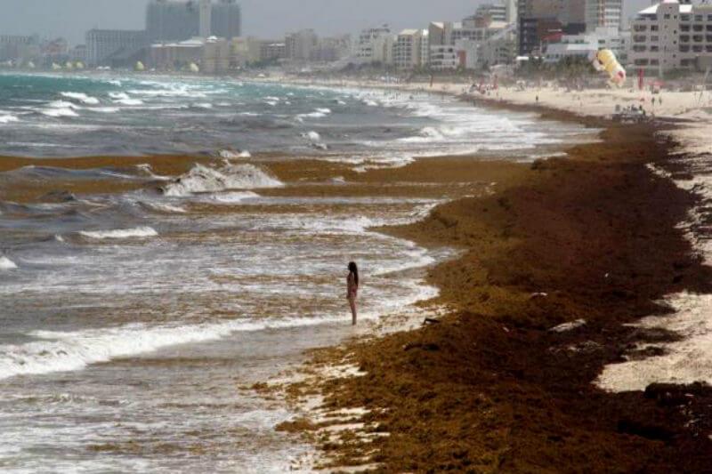 Con su programa, la Organización Soriana llevó a cabo la primera jornada de limpieza de sargazo, el cual ha aumentado por el cambio climático, en varias playas.