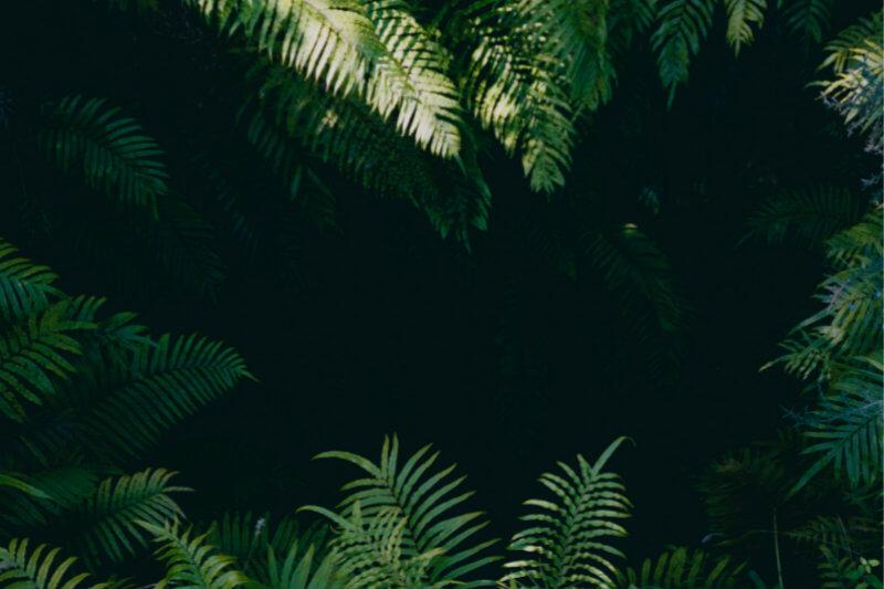 Según estudio, efectos del fenómeno están alterando la composición de las especies de árboles, los cuales no consiguen ponerse al día con el entorno cambiante.