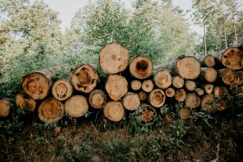Se acaba de registrar el peor índice en una década, con el aumento de casi un 14% en la deforestación entre agosto de 2017 y julio de este año.