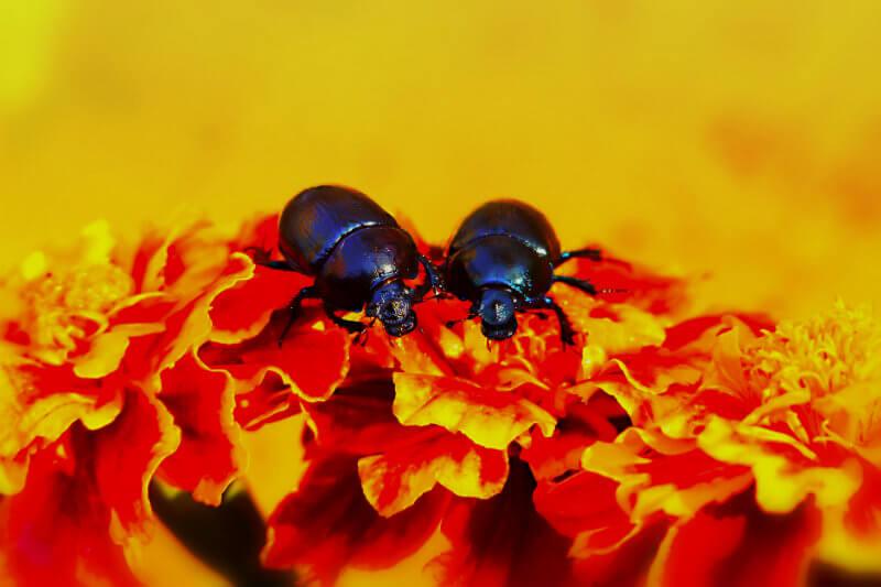 Nuevo estudio de la Universidad de Anglia Oriental reveló el daño que producen las olas de calor al esperma de los insectos.