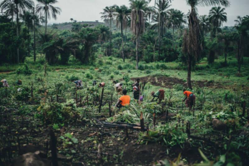 El documento, aprobado por la Asamblea General de la ONU, tiene como objetivo proteger los derechos de los trabajadores rurales vulnerables al fenómeno.