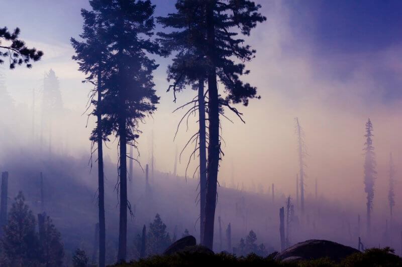 Según un nuevo análisis, solo los dos incendios de noviembre produjeron emisiones equivalentes a casi 5.5 millones de toneladas de dióxido de carbono.
