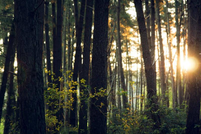 Banco Mundial aprobó financiar con $12.2 millones el proyecto de Gestión Integrada del Bosque, que lidera el Ministerio del Ambiente en Atalaya, Ucayali.
