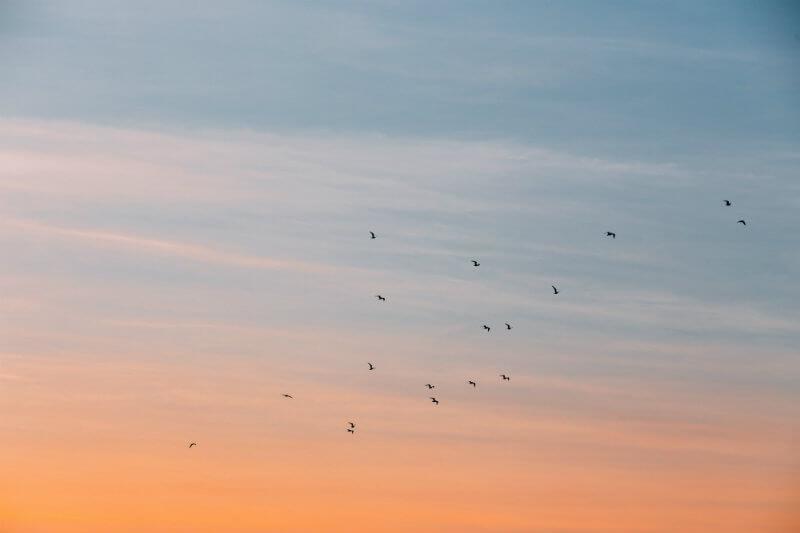 El cambio climático es una amenaza para la biodiversidad. En la Sabana de Bogotá, 51% de las especies de aves registradas han dejado su hábitat natural.