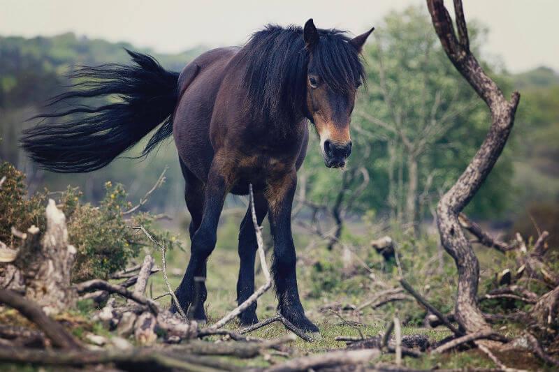 Decenas de caballos fueron hallados en Deep Hole, un pozo que se secó por la ola de calor extrema que azota al país.