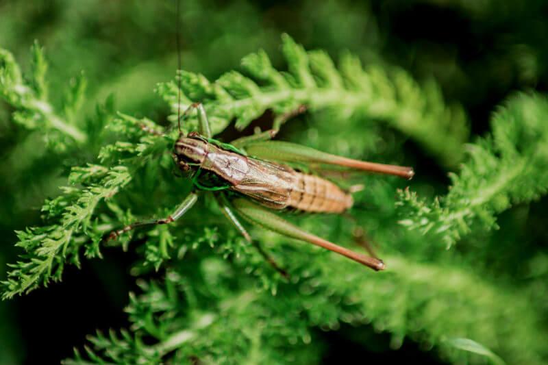 Según investigadores los insectos tienen potencial como fuente alternativa de proteínas, pero se necesitan más estudios para evitar un desastre ambiental.