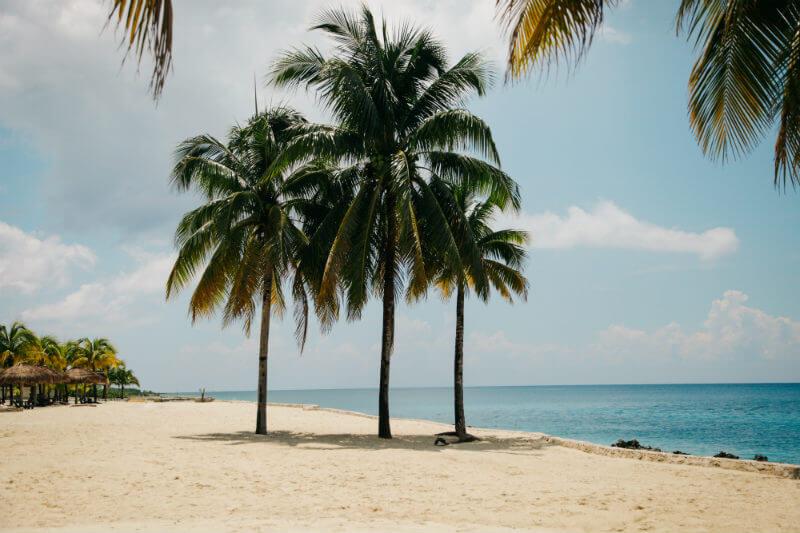 Coordinador de AMC afirmó que se pueden llegar a producir 114 kilogramos de setas por cada tonelada de sargazo fresco y así limpiar las playas de Quintana Roo.