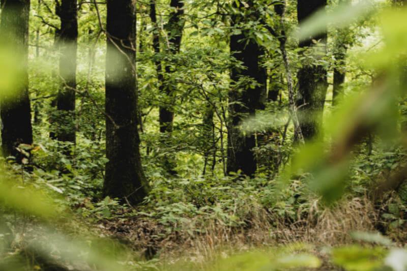 Informe revela que se han talado ilegalmente 2.5 millones de metros cúbicos de madera y los madereros han falsificado más de 133,300 ubicaciones de árboles.