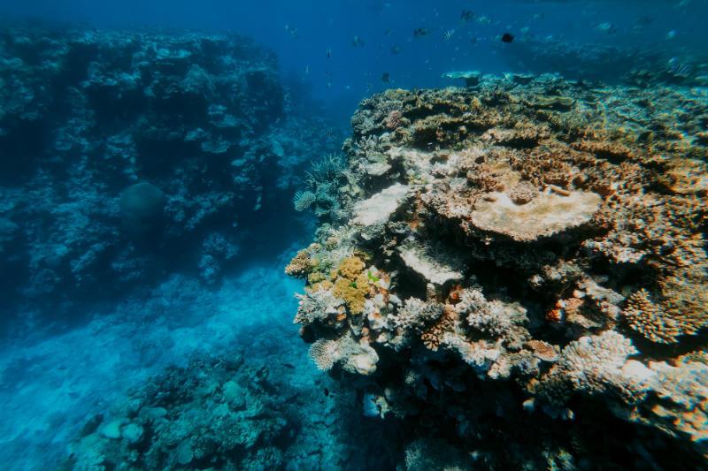 Modelos climáticos proyectan que la mayoría de los arrecifes del mundo podrían experimentar una decoloración anual para 2050 si no tomamos medidas preventivas.