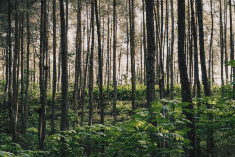 La tasa de deforestación de Indonesia disminuyó en 2017, lo que provocó un pago en virtud de un acuerdo climático de $1 mil millones.