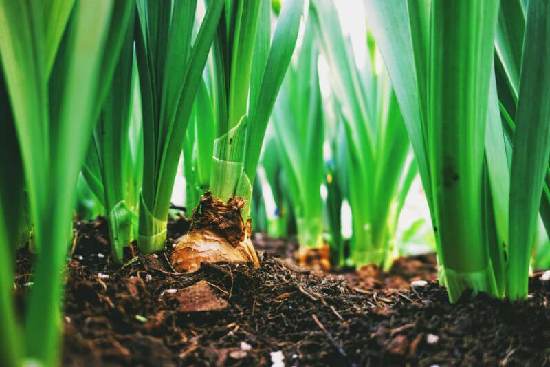 Legislación establece que las aguas residuales tratadas podrán utilizarse para todo tipo de riego agrícola, tanto de cultivos alimentarios como no alimentarios.