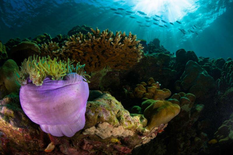Estudio comprueba que los corales del Mar Rojo, en el Golfo de Áqaba, y sus descendientes son capaces de sobrevivir al aumento de la temperatura del agua.
