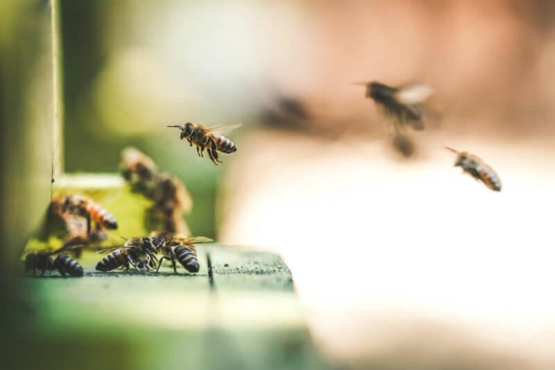 Según informe, más del 40% de las especies de insectos podrían extinguirse en las próximas décadas, por ello hay que cambiar las formas de producir alimentos.