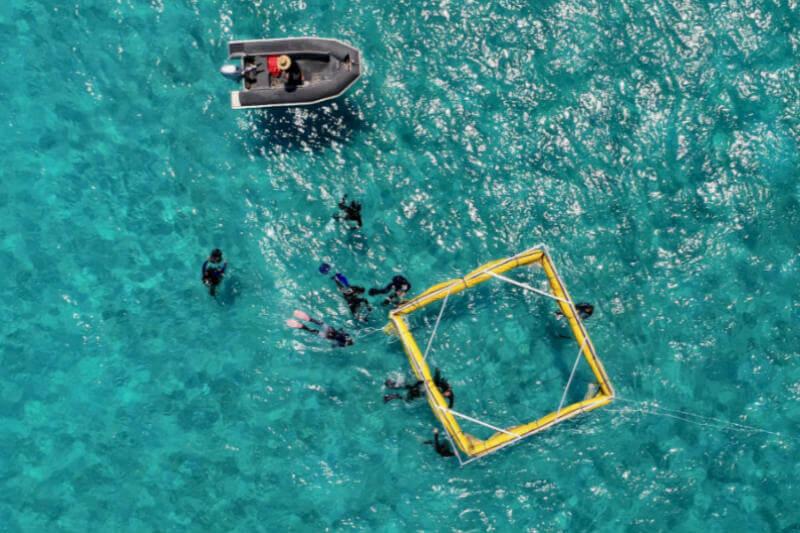 La Universidad de Tecnología de Queensland (QUT) ha desarrollado un robot submarino que puede transportar hasta 100,000 pequeños corales resistentes al calor.