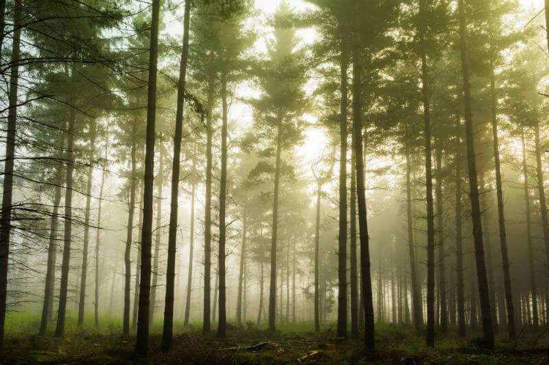 Los bosques eliminan el 30% de las emisiones de CO2 a nivel mundial, informó el CCMSS, por eso es necesario reforestar para que eliminen más contaminación.