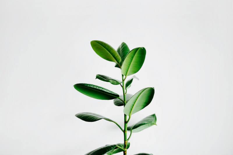 Estudio muestra que bajo un clima más cálido las plantas y el suelo pueden comenzar a absorber menos emisiones GEI y provocar más climas extremos.