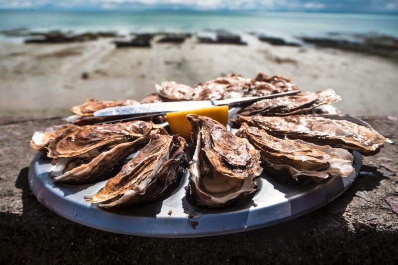 Las ostras que sobreviven y crecen en aguas con altos niveles de acidez desarrollan una concha más pequeña y frágil, que se rompe con mayor facilidad.