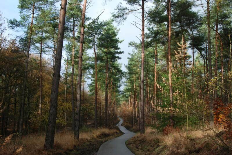 """Estudio señala que bosques de 4 regiones del país han cruzado """"un umbral climático crítico para la generación de árboles después de un incendio""""."""