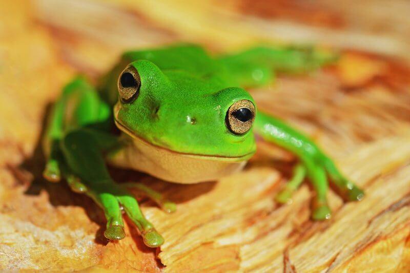 La reducción de los hábitats podría poner en riesgo de extinción a 886 especies de anfibios, 436 de aves y 376 de mamíferos.