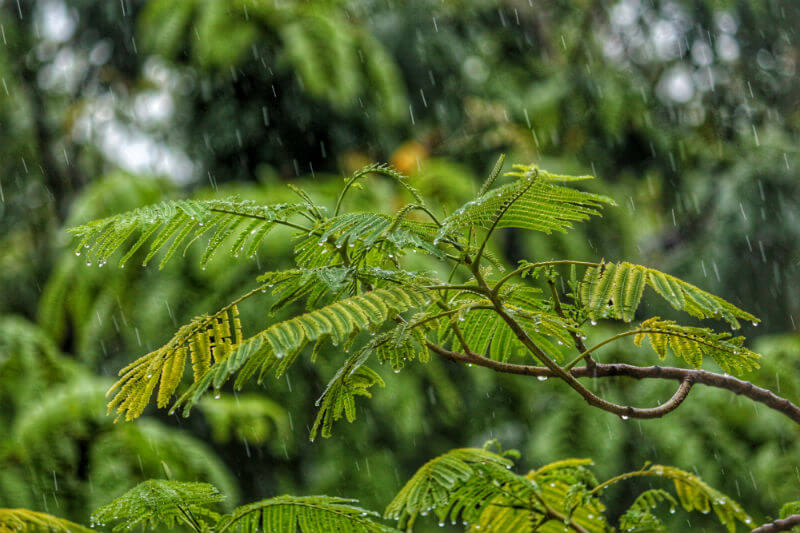 Regiones del país como la zona Andina y el suroccidente están en alerta por fuertes lluvias y siete incendios forestales se mantienen en la Costa Caribe.