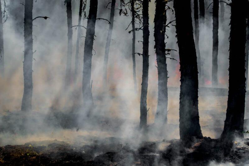En lo que va del año, se han desarrollado un total de 903 incendios, que en promedio han afectado unas 2 mil 108 hectáreas de suelo.