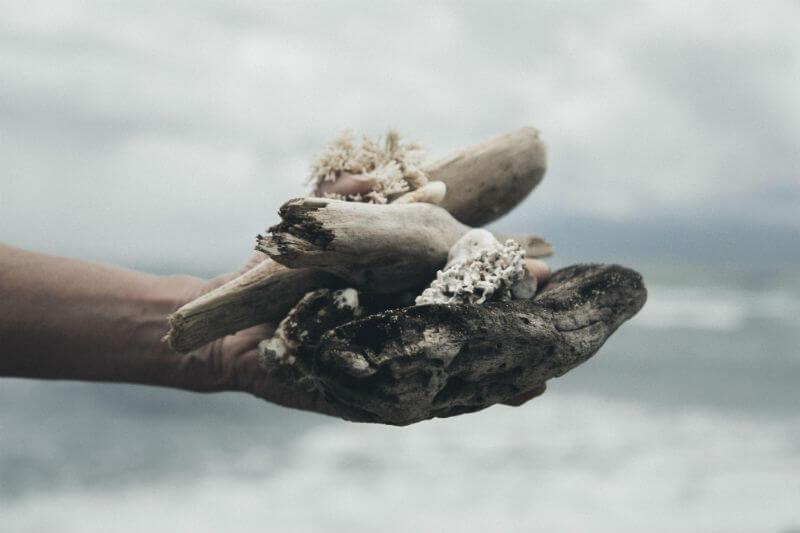El 30% de los corales someros murieron y el 40% de los ubicados a una profundidad de 40 metros se vieron afectados por cambios de temperatura.