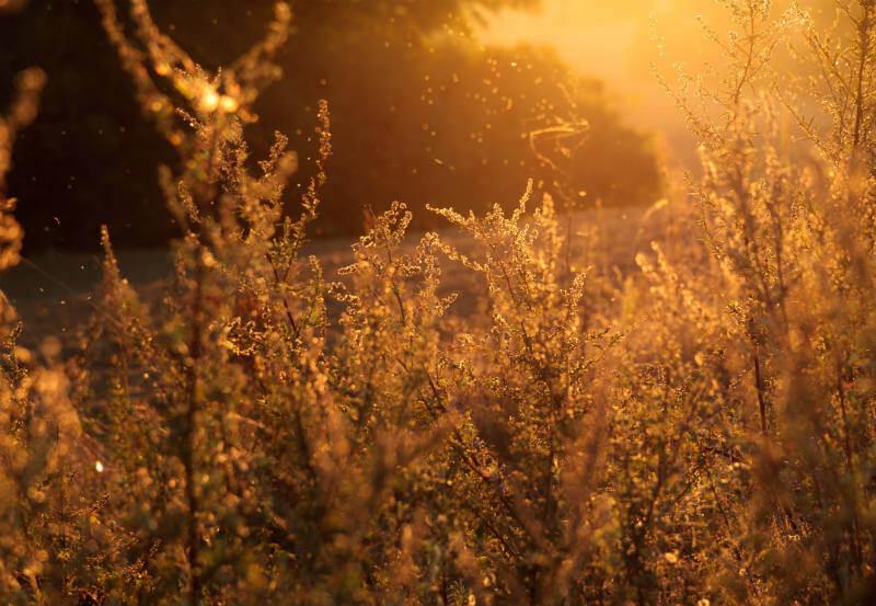 Malas noticias: el cambio climático empeorará las condiciones para las personas que padecen de alergias.