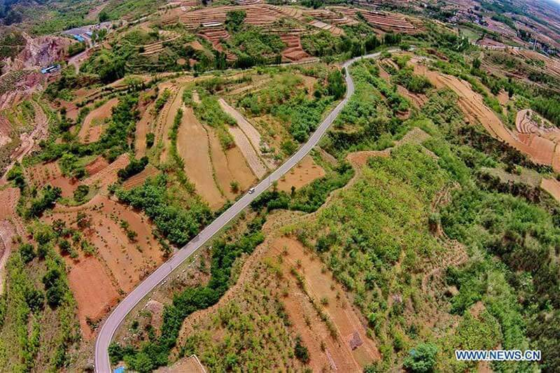 China reforestará hectáreas para 2020