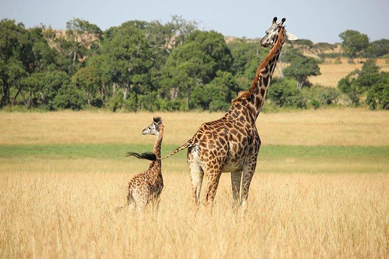 Extinción 1 millón especies