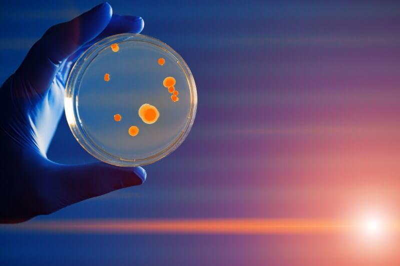 Algunos virus y bacterias son ignorados en las políticas medioambientales.