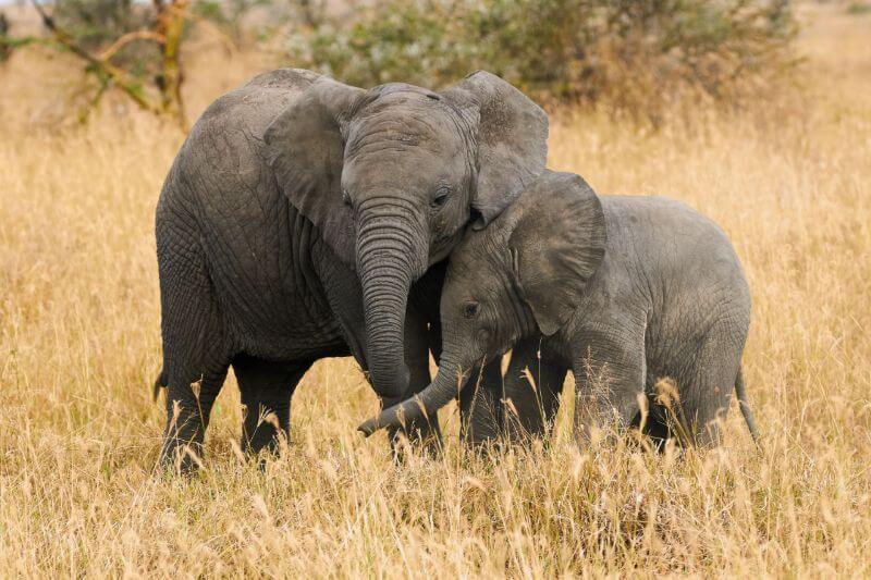 Los animales que serán vendidos están valorados en un millón de euros que se destinarán a los presupuestos de los parques.