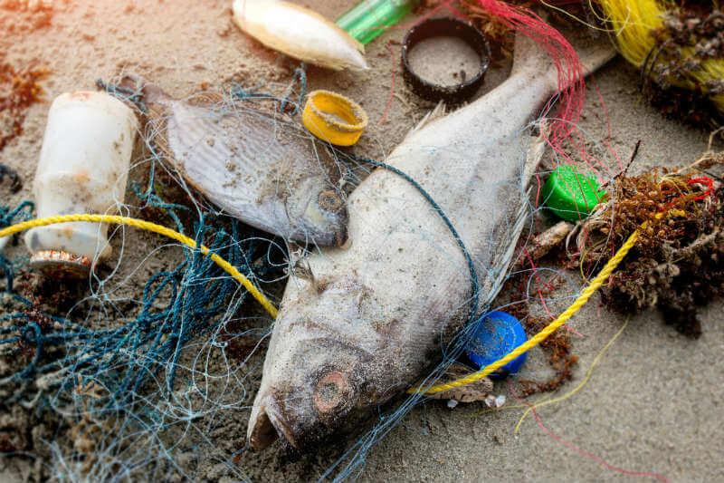 """Al menos 60 de los 3,000 compuestos químicos asociados a la creación del plástico suponen un """"alto riesgo"""" para la salud humana."""