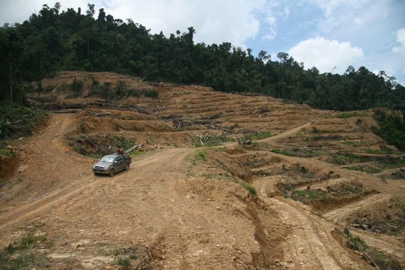 Los ambientalistas temen que 2019 sea uno de los peores años para la deforestación en la memoria reciente.