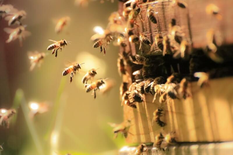 Un estudio marca el peor invierno registrado para los apicultores, a pesar del esfuerzo intenso para detener las pérdidas.