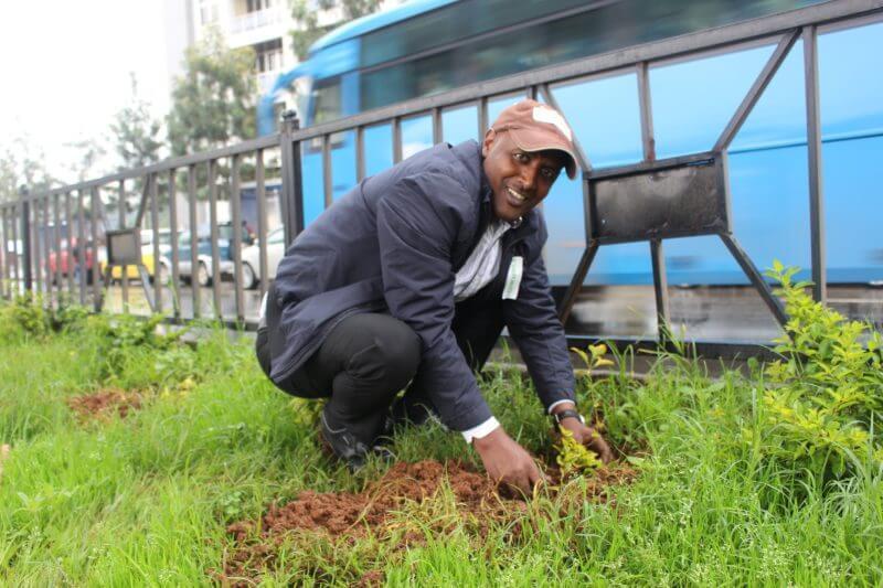 Etiopía plantó más de 353 millones de árboles en 12 horas el lunes 29 de julio y las autoridades creen que es un récord mundial.