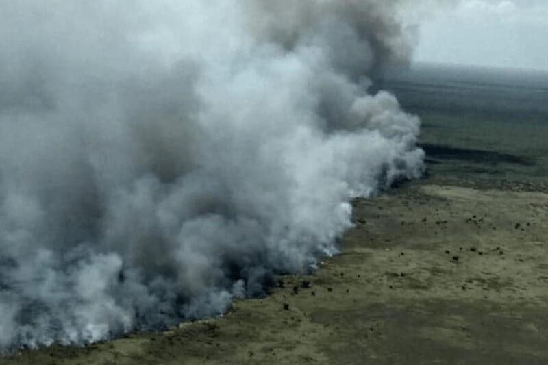 Cientos de especies se encuentran en peligro ante el avance de las llamas; se calcula que más de mil hectáreas ya fueron consumidas por el fuego.