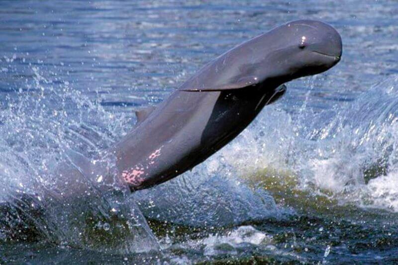 Las islas y áreas protegidas del golfo de California son el único lugar en el mundo donde habita la vaquita marina, especie en estado crítico de extinción.