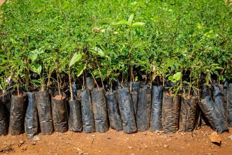 Existe espacio suficiente para incrementar un 25% la superficie forestal como la solución más inmediata al efecto invernadero.
