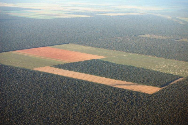 De acuerdo con la proyección del INPE, la deforestación pasó de los 596.6 km2, en julio de 2018, a los 2,254.8 km2 este año.